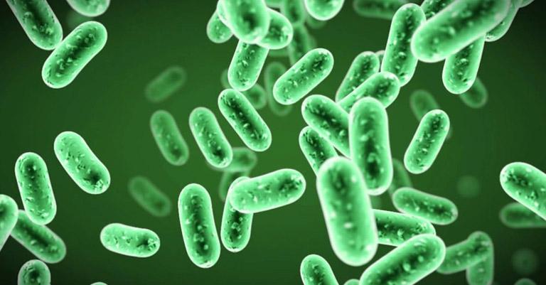 Microorganismos probióticos