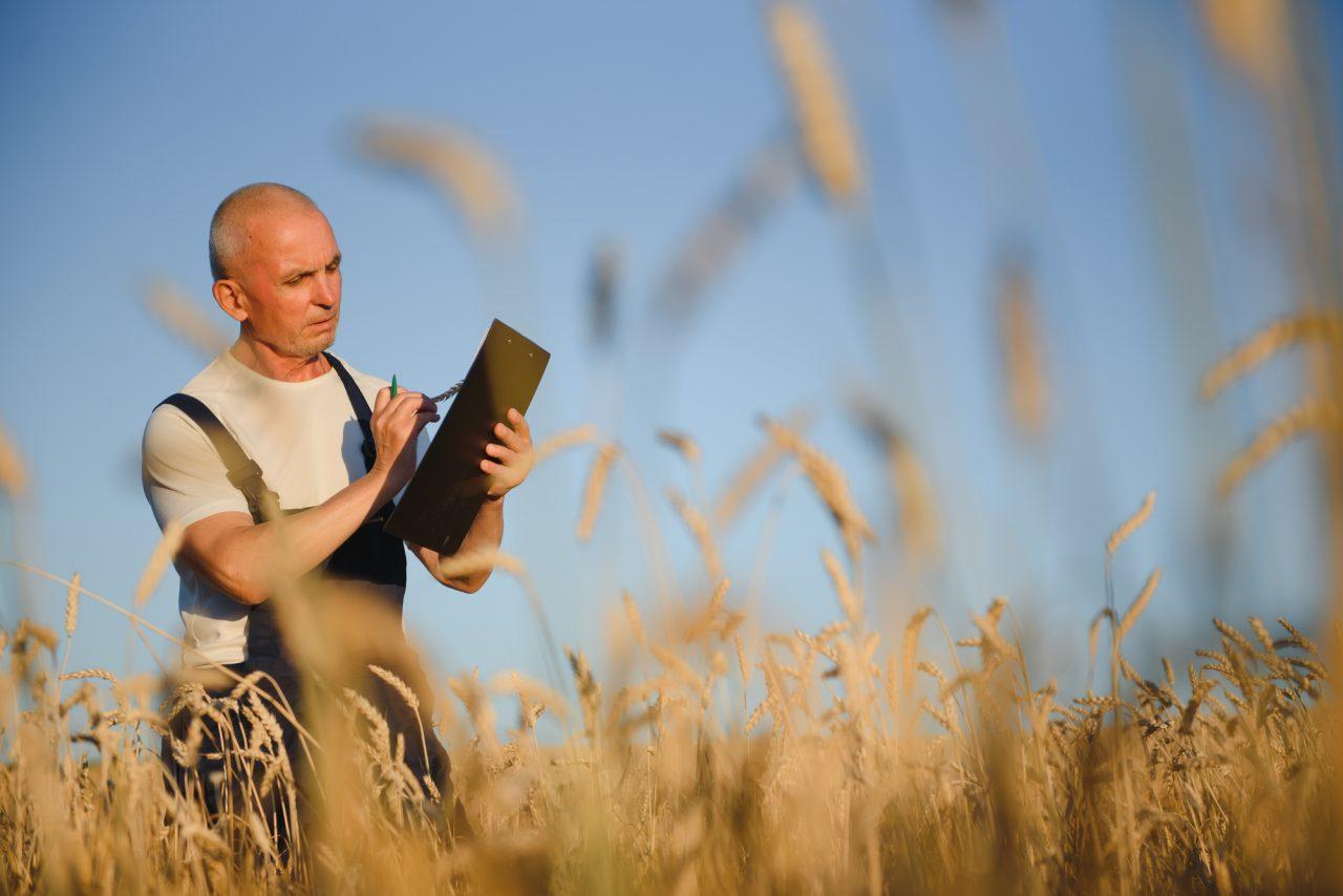 El papel de los cereales de grano entero en el Antropoceno: La Comisión EAT-Lancet sobre dietas saludables en sistemas alimentarios sostenibles