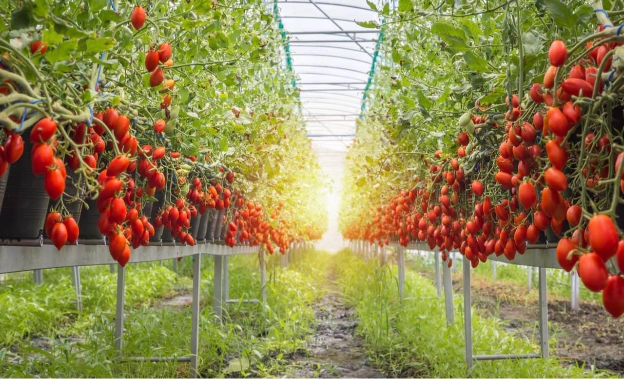 La importancia de los sistemas alimentarios y del medio ambiente en la nutrición